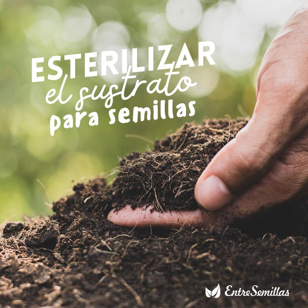 esterilizar el sustrato para semillas