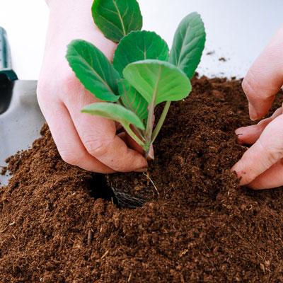 plantas de semillas germinadas