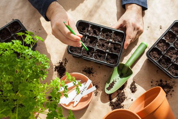 sembrando semillas en semilleros