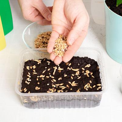 tuper para germinar semillas