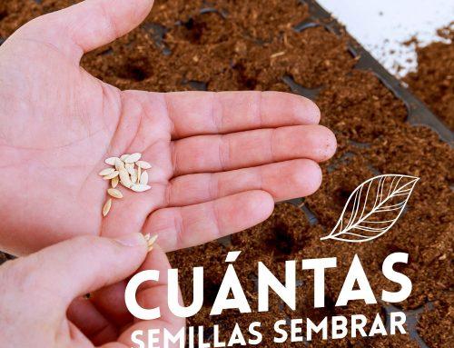 ¿Cuántas semillas sembrar? Cantidad de semillas por hoyo